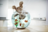 Teddy bear in fish tank.